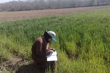 اطلاعات 24 هزار کشاورز قزوینی ثبت شد