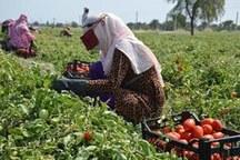 صندوق توسعه فعالیت های کشاورزی زنان روستایی هرمزگان تشکیل شد