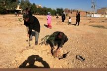 کاشت 50 هزار اصله نهال در اردبیل همزمان با روز درختکاری