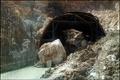 عامل حادثه ریزش تونل چری در شهرستان کوهرنگ اعلام شد