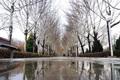 بارش برف مناطق سردسیر  استان اصفهان را سفید پوش کرد