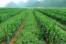 اجرای ۴۶ هزار هکتار کشاورزی حفاظتی در آذربایجان شرقی