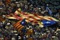 دولت اسپانیا برای جلوگیری از برگزاری همهپرسی در کاتالونیا از پلیس کمک میگیرد