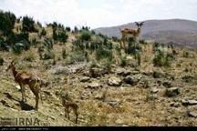 متخلفان 714میلیون ریال به محیط زیست اسفراین خسارت زدند