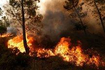 آتش بیاحتیاطی بر جان 35 هکتار از مراتع چناران  مراتعی که از بین رفتند جزء مراتع درجهیک شهرستان بودند