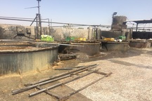 سهمی به اندازه آشغال گوشت های پایتخت