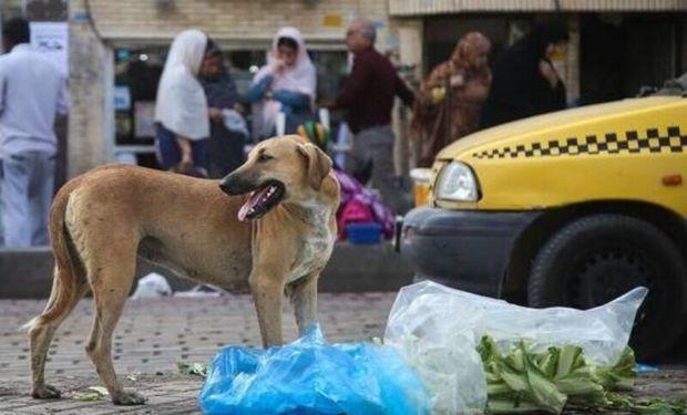 نگرانی مردم از پرسه سگهای ولگرد در خیابان های شاهرود