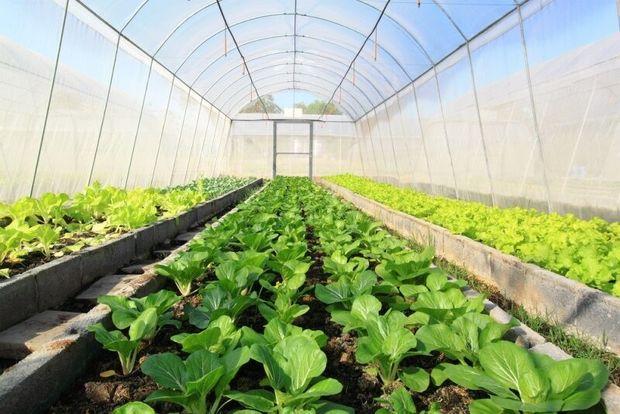 مدرنسازی گلخانههای استان مرکزی کلید خورد