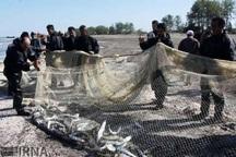 بیش از سه تن ماهی استخوانی در آستارا صید شد