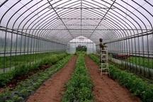 دانشگاه آزاد مهاباد در طرح های گلخانه ای سردشت همکاری می کند