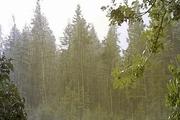 یکشنبه و دوشنبه سامانه بارشی در سیستان وبلوچستان شدت می گیرد