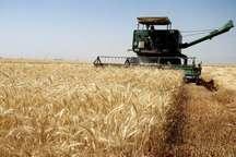 برداشت بیش از 2 هزار تن گندم و جو از مزارع خداآفرین