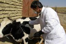 بیش از 40هزار راس دام علیه تب برفکی در ایرانشهر واکسینه شدند
