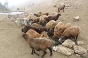 143 دستگاه آبشخور فلزی در مراتع کردستان نصب شد