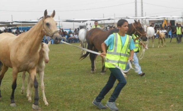 رقابت بین المللی زیبایی اسب در اشکذر یزد آغاز شد