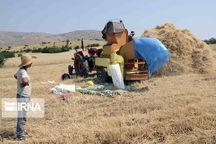 افزونبر ۲۹۰ میلیارد ریال طلب گندمکاران سیستان و بلوچستان پرداخت شد