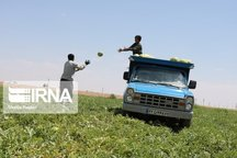 ۱۳۸ صندوق توسعه کشاورزی با سرمایه ۱۷۵۰ میلیارد تومان درکشور فعال است