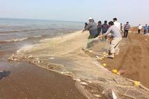 گلستانی ها 254تن ماهی صید کردند