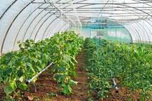 پرداخت 11میلیارد ریال تسهیلات فعالیت گلخانه ای برای کشاورزان زنجانی