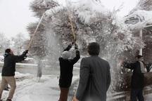 شهروندان استان مرکزی به مشارکت برف تکانی درختان فراخوانده شدند