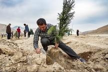 ۷.۵ میلیون هکتار نهالکاری برای مبارزه با گردوغبار در کشور