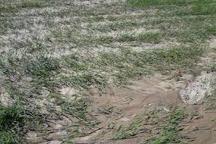 خسارت ۷۵۰میلیارد تومانی به بخش کشاورزی آذربایجان غربی
