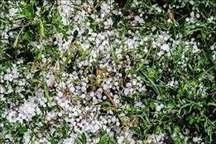 تگرگ به کشتزارهای گلیل شیروان خسارت وارد کرد