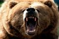 زخمیشدن یک چوپان بر اثر حمله خرس در فارسان