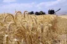 ثبت اطلاعات هویتی کشاورزان از الزام های خرید تضمینی است