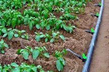 مجوز برای سرمایه گذاران بخش کشاورزی ۲۰ روزه صادر می شود