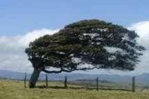 وزش باد شدید، بارش باران و کاهش دما درالبرز