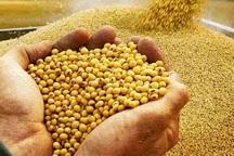 کشاورزان مازندران بیش از چهار هزار تن سویا برداشت کردند