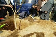 ضرورت کاشت درختان مثمر در اراضی شیبدار لرستان