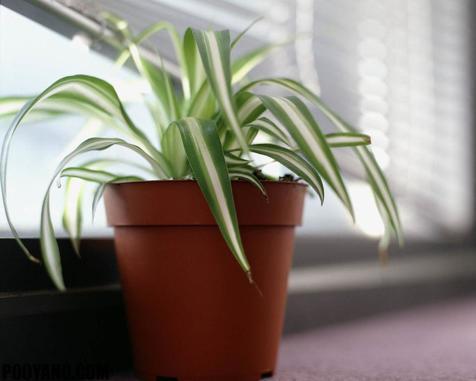 گیاهانی که هوای محل کارتان را مطبوع می کند