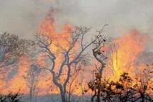 آتش سوزی در 2هکتار از جنگلهای ارمند لردگان