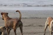 سامانه 137: سگ ها در انتظار پیمانکار شهرداری!