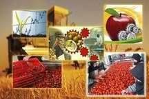 50 درصد محصولات کشاورزی در خراسان شمالی فرآوری می شود