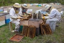 امسال 800 تن عسل در اشنویه تولید شد