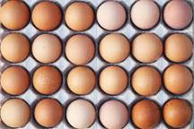 نرخ تخم مرغ افزایش یافت