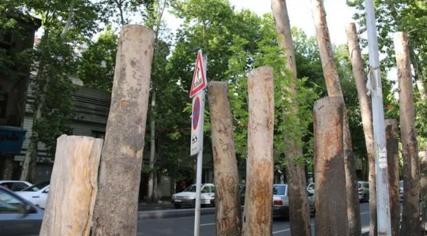 تهران، شهری نامهربان با چنارهایش