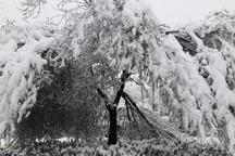 سرما 340 میلیارد تومان به باغات دماوند خسارت وارد کرد