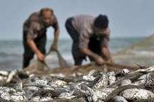 صید هفت هزار تن ماهی صنعتی و خوراکی در پارسیان