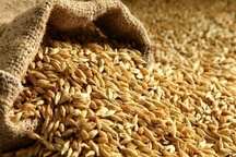 محصولات کشاورزی البرز از مرز 80 هزار تن میگذرد