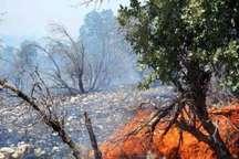 آتش سوزی در جنگل کرخه در شوش
