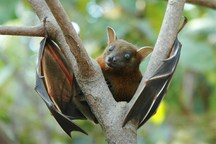 خطر انقراض دو گونه خفاش نادر غار علی شیخ خوی