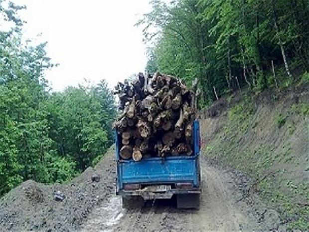 محموله چوب قاچاق در آستارا کشف شد