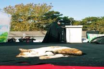 گربه ای که وارد سخنرانی معصومه ابتکار شد + عکس
