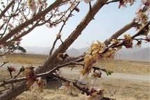 سیل وسرما 8400میلیارد ریال به محصولات کشاورزی زنجان خسارت زد