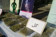 گل و تریاک بیشترین ماده مخدر مصرفی کشور است
