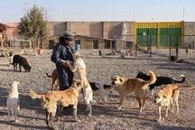 شهرداری بیرجند از سمن های ساماندهی سگ های ولگرد حمایت می کند